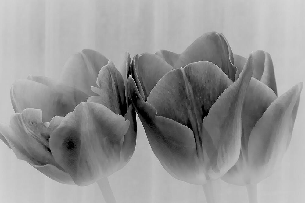 Three Tulips in Black and White by Cee Neuner