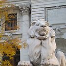Classic Lion Sculpture, New York Public Library, New York City by lenspiro