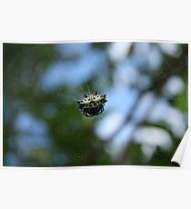 Shiny Orb Weaver Spider Poster