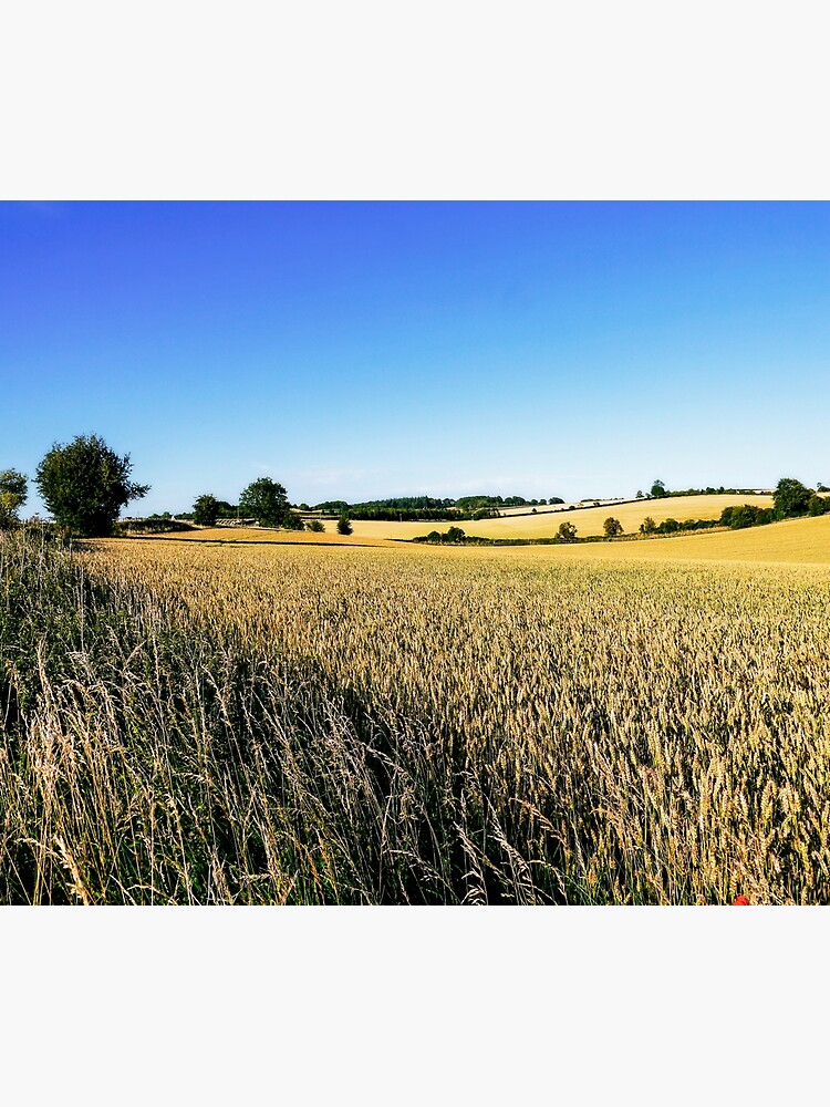 Summer Harvest by ScenicViewPics