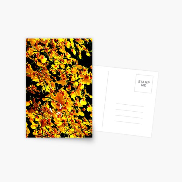 Hot House Oncidium Postcard