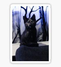 Soli the tortie cat #1 Sticker