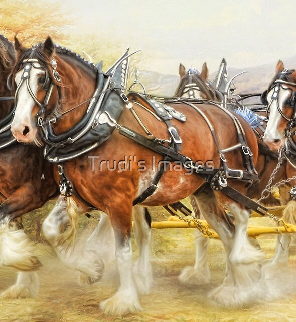 Clydesdales in Harness by Trudi's Images