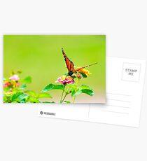 Monarch on Lantana III Postcards