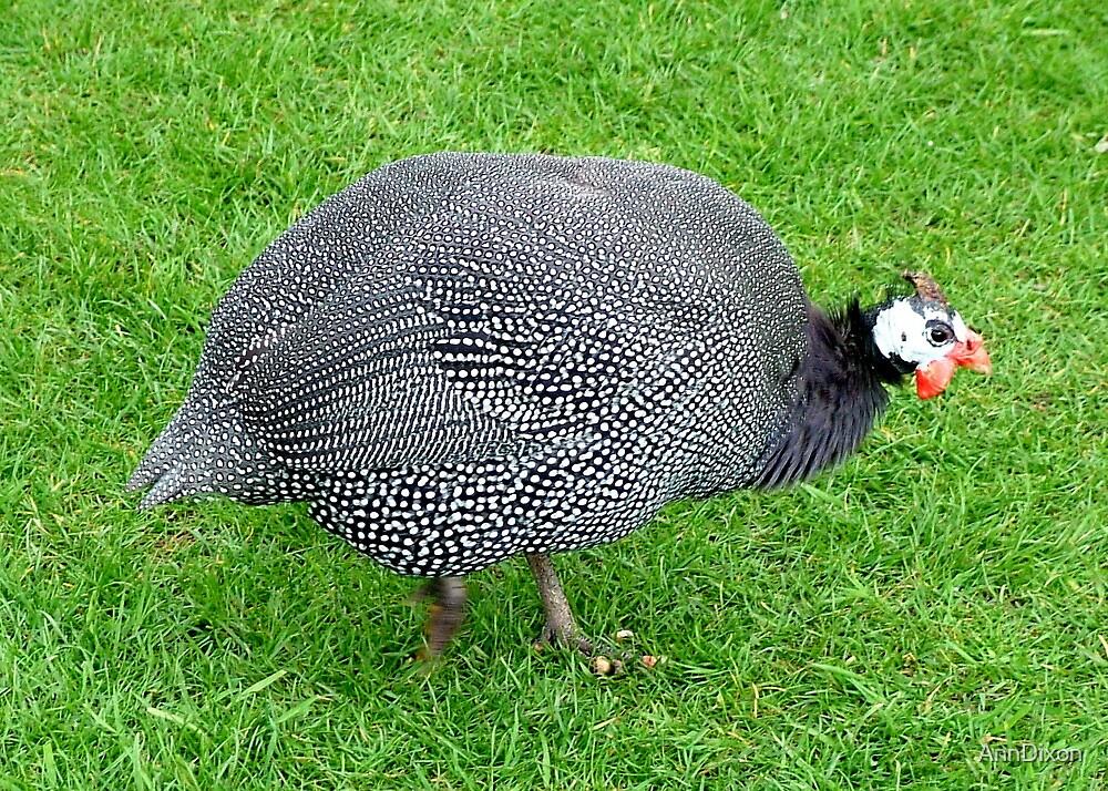 Guinea Fowl by AnnDixon