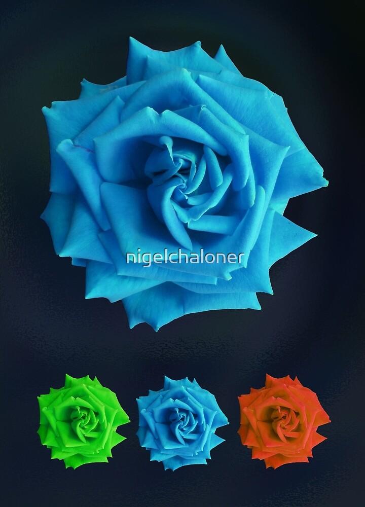 « Blue Rose » par nigelchaloner