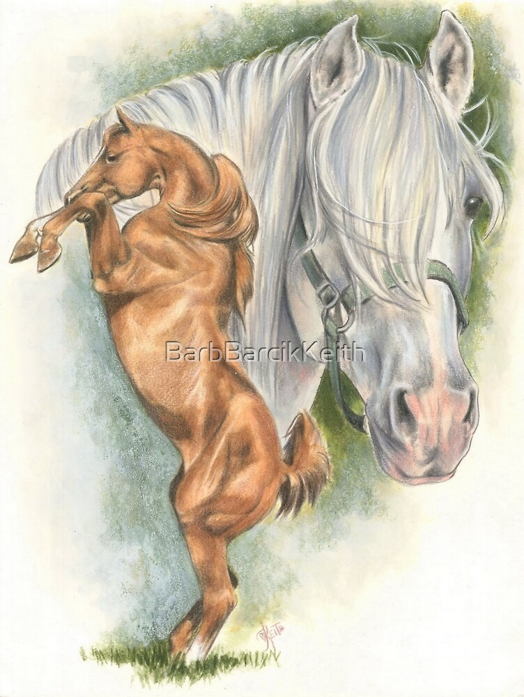 Andalusian by BarbBarcikKeith