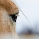 The Eye of the Horse by Valerie Rosen
