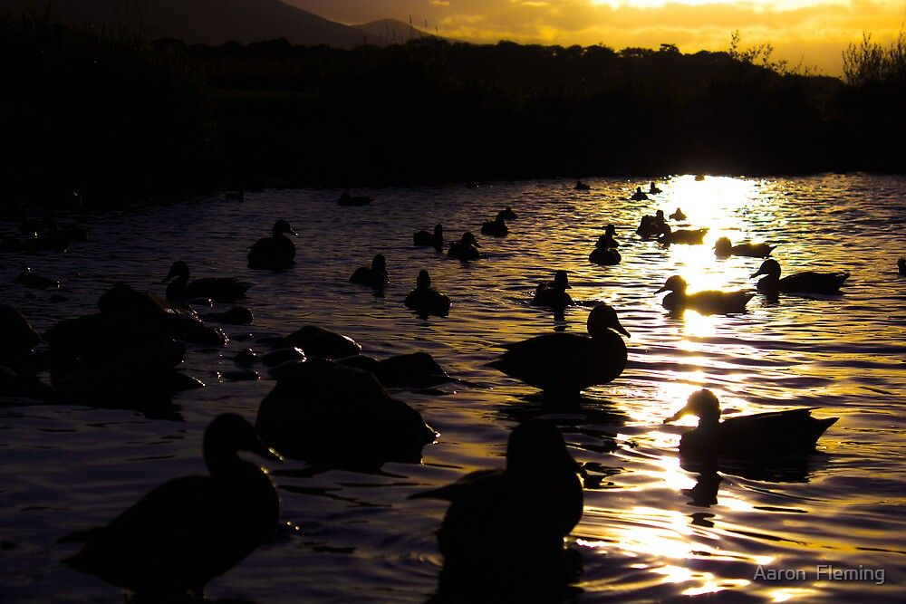 Ducks silhouette sunset  by Aaron Fleming