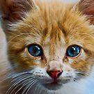 1120 blue eyes by pcfyi