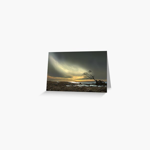 Persistence Of Life Greeting Card