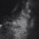 Pincers by iltby