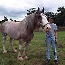 Strawberry Roan Working Horse - Gippsland by Bev Pascoe