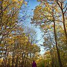 Autumn Morning Walk by Geoff Carpenter