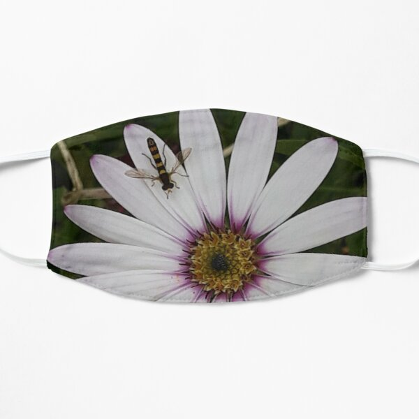 Osteospermum (African Daisy) With Hoverfly Flat Mask