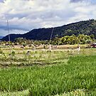 In The Fields at Banyuatis by jayneeldred