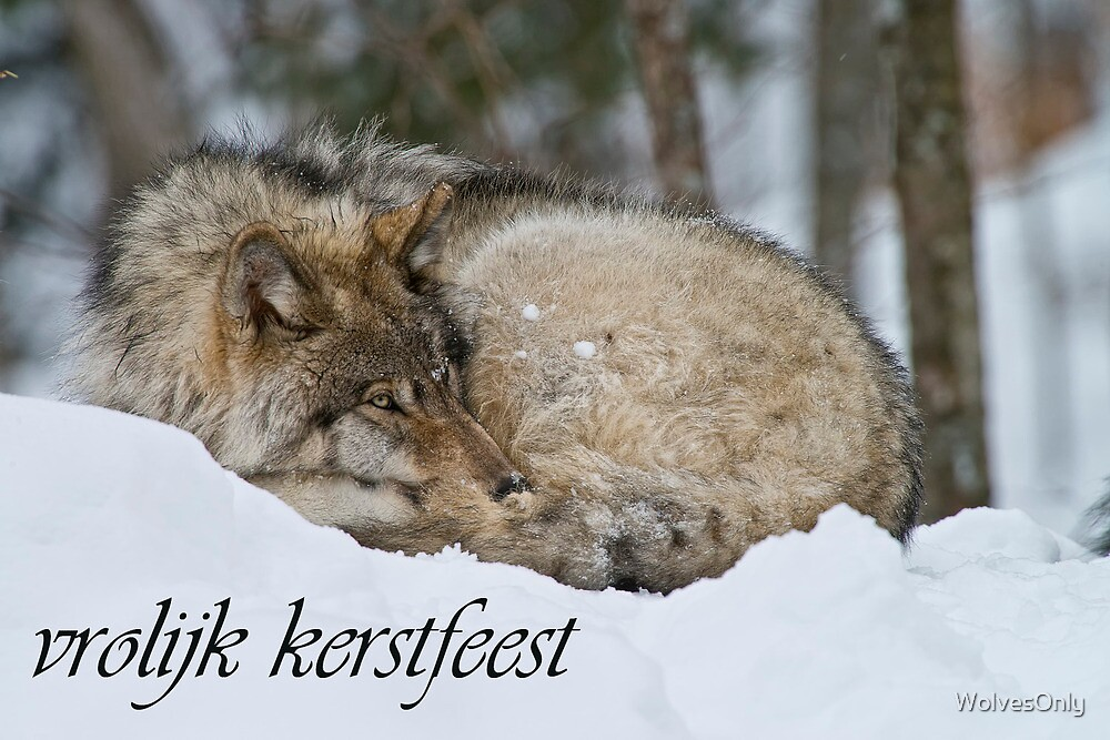 Timber Wolf Christmas Card Dutch 7 by WolvesOnly