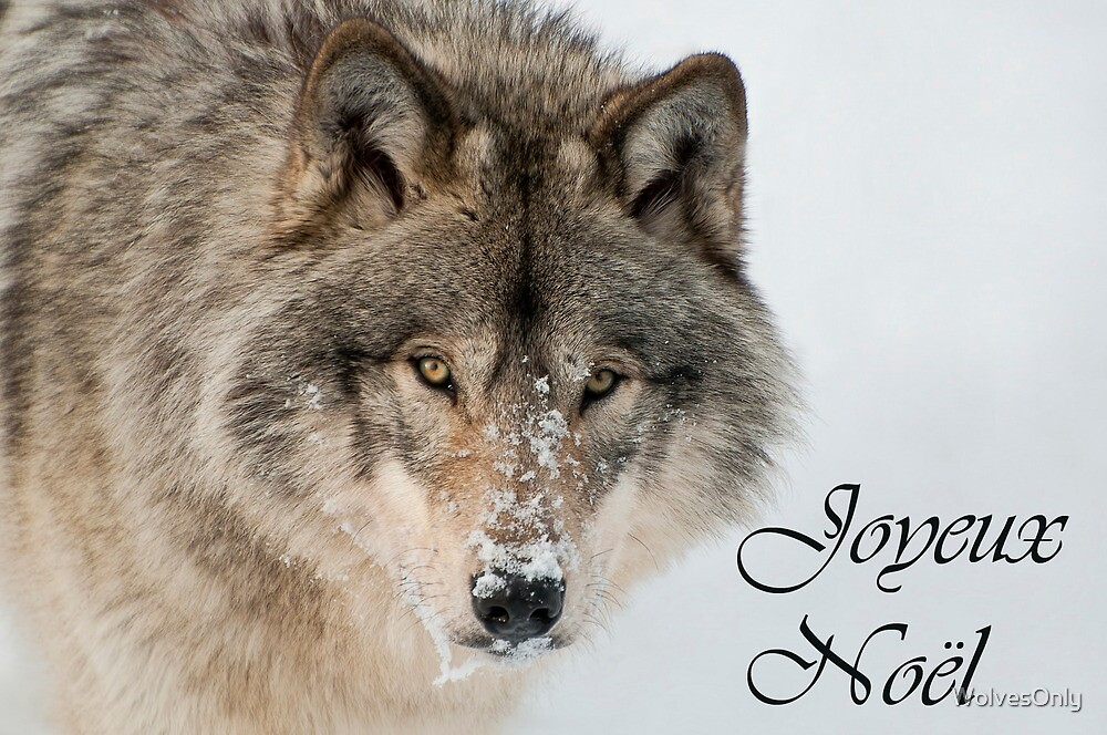 Timber Wolf Christmas Card French 9 by WolvesOnly
