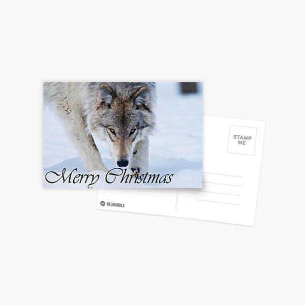 Timber Wolf Christmas Card English 12 Postcard