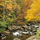 smoky mountain fall color on little river by dc witmer