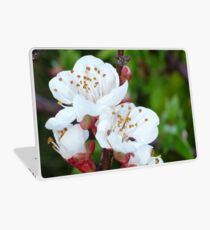 Apricot Blossom At Dawn Laptop Skin