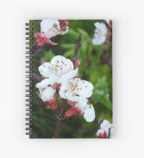 Apricot Blossom At Dawn Spiral Notebook
