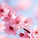 garlanding the spring skies by sapaho