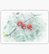 Frozen Rose Hip Sticker