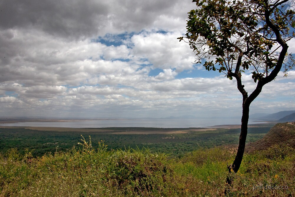 Tree of Ngorongoro by phil decocco