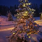 Christmas Tree #1 by Rachel Jeffrey
