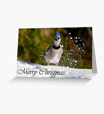 Blue Jay Christmas Card 1 Greeting Card