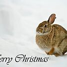 Eastern Cottontail Christmas Card 1 by Michael Cummings