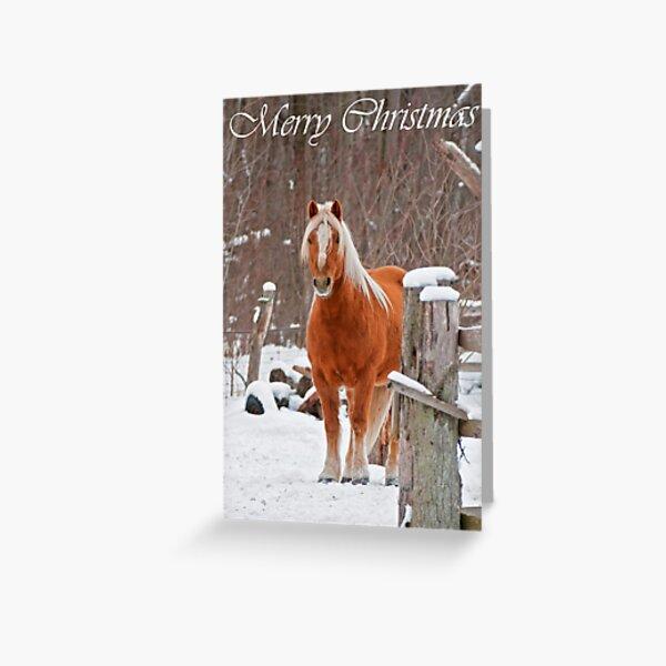 Horse Christmas Card 1 Greeting Card