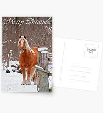 Horse Christmas Card 1 Postcards