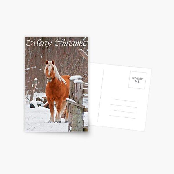 Horse Christmas Card 1 Postcard