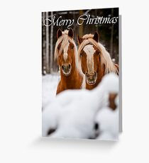 Horse Christmas Card 2 Greeting Card