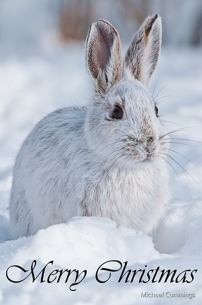 Snowshoe Hare Christmas Card 2 by Michael Cummings