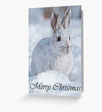 Snowshoe Hare Christmas Card 2 Greeting Card