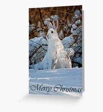 Snowshoe Hare Christmas Card 4 Greeting Card
