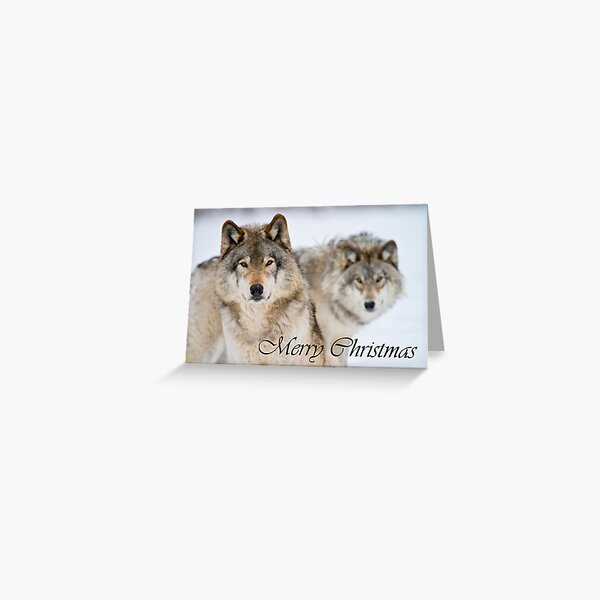Timber Wolf Christmas Card 7 Greeting Card