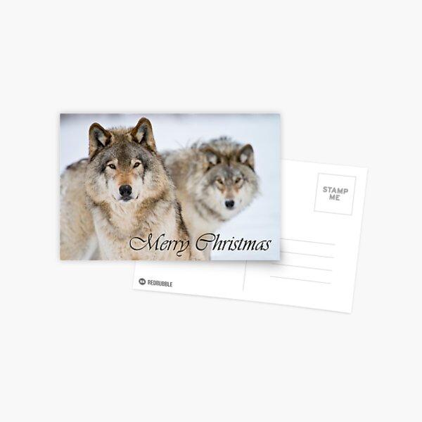 Timber Wolf Christmas Card 7 Postcard