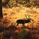 Deep in the woods by Martin Griffett