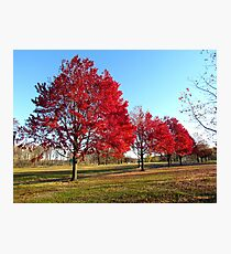 Autumn Parade of Trees Photographic Print