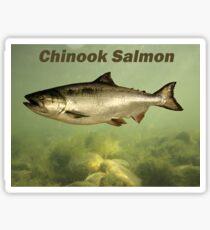 Chinook Salmon Sticker
