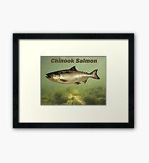 Chinook Salmon Framed Print