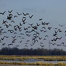 Geese by WildestArt