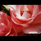 Sweet Nature by Lozzar Flowers & Art