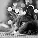 Biddy Christmas Bokeh by Yvonne Roberts