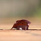 Lonely Leaf by Sharon Brown