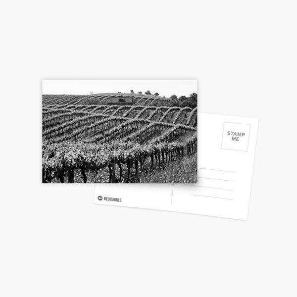 Barossa Vineyard Postcard